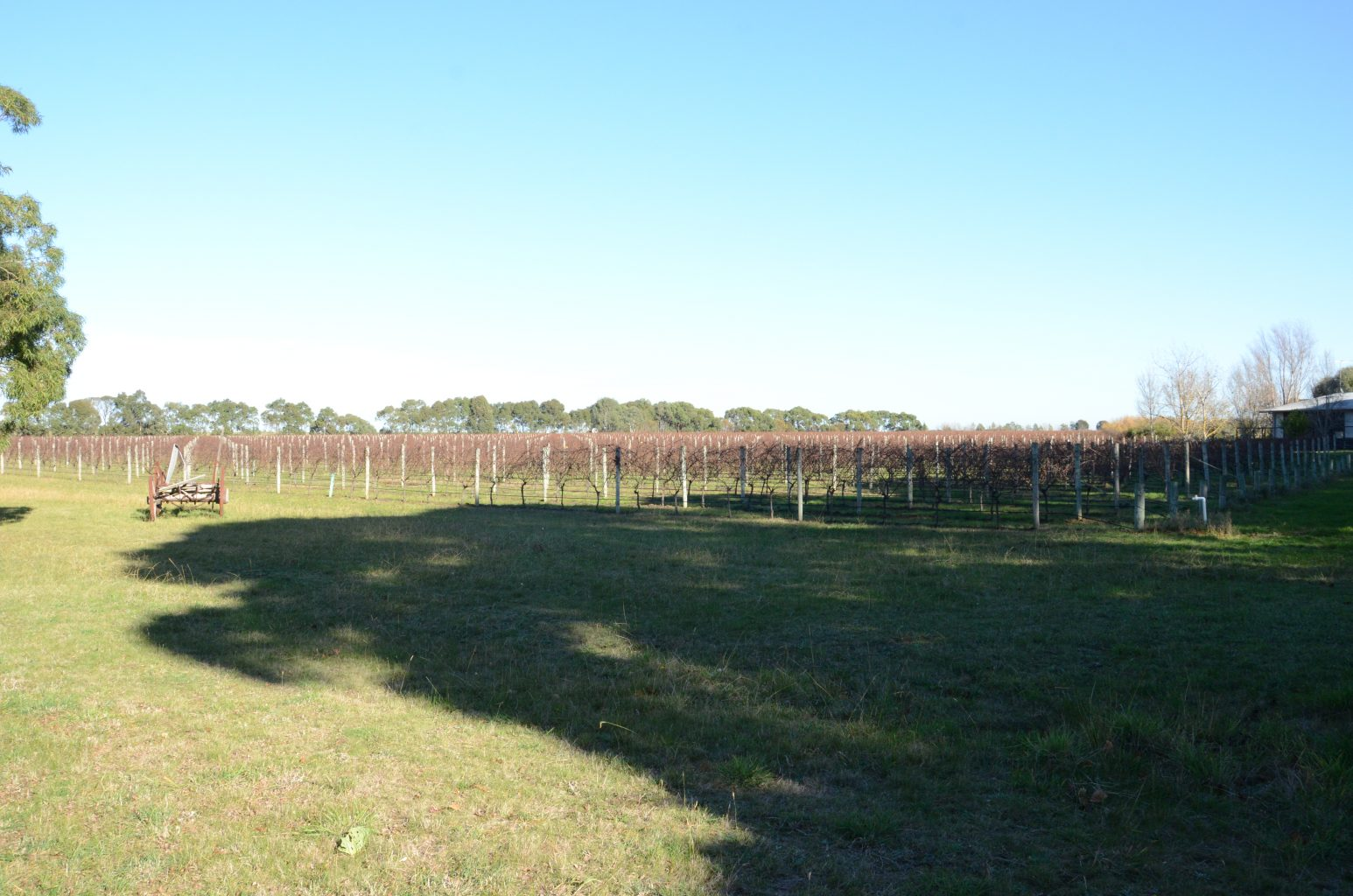 These grape vines  will be subdivided